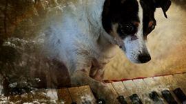 Coração de Cachorro - Foto