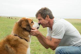 Quatro Vidas de um Cachorro - Foto