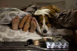 Mato Sem Cachorro - Foto