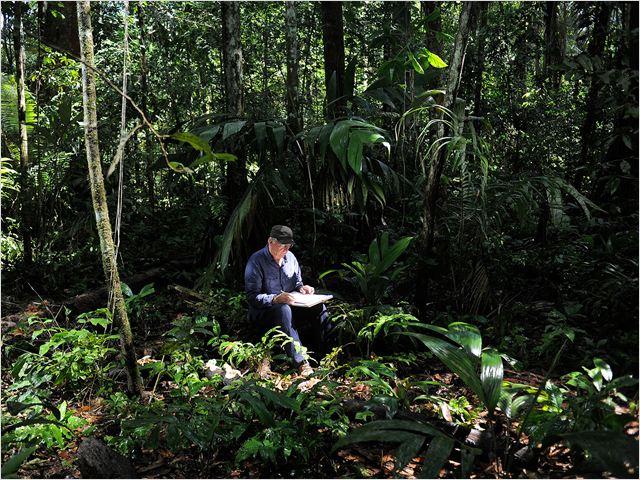 Il était une forêt : Photo Francis Hallé